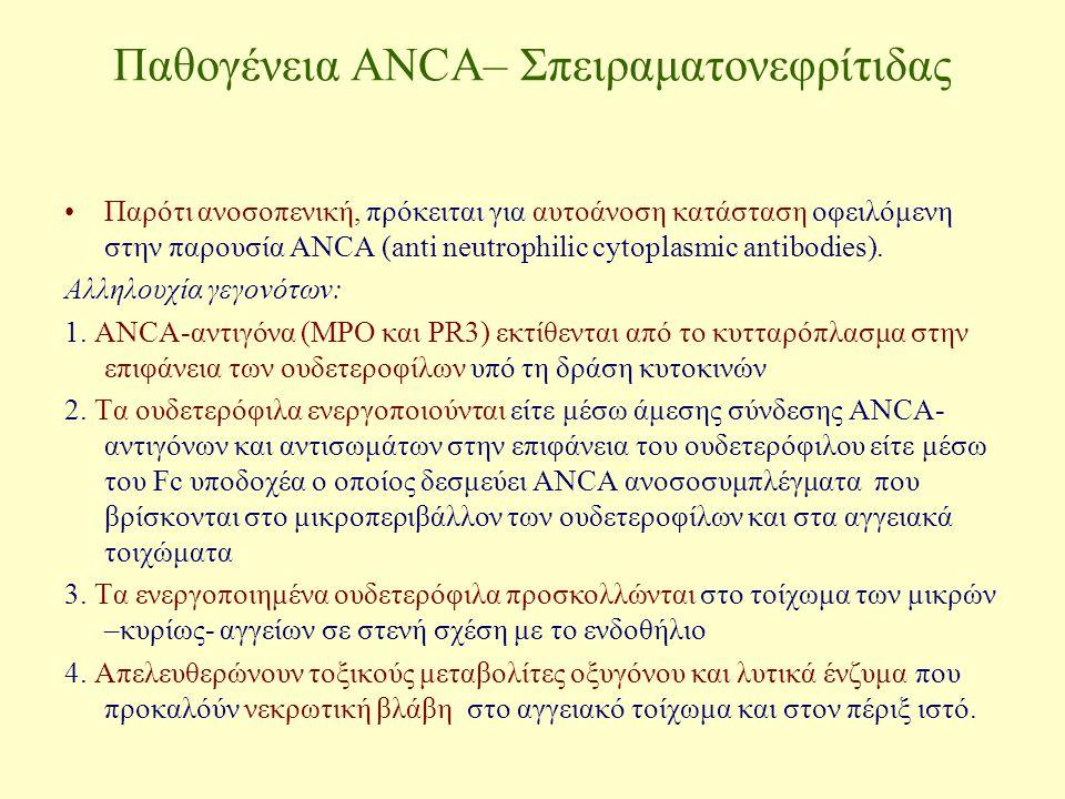 Παθογένεια ANCA– Σπειραματονεφρίτιδας