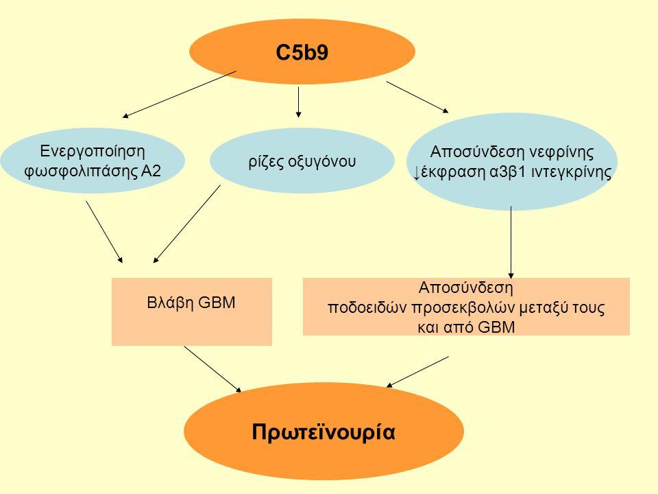 C5b9 Πρωτεϊνουρία Αποσύνδεση νεφρίνης Ενεργοποίηση
