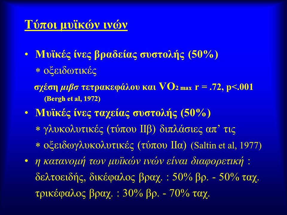 Τύποι μυϊκών ινών Μυϊκές ίνες βραδείας συστολής (50%)  οξειδωτικές