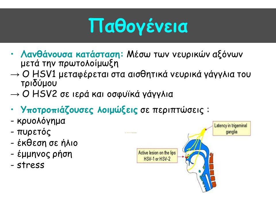 Παθογένεια Λανθάνουσα κατάσταση: Μέσω των νευρικών αξόνων μετά την πρωτολοίμωξη. → Ο HSV1 μεταφέρεται στα αισθητικά νευρικά γάγγλια του τριδύμου.