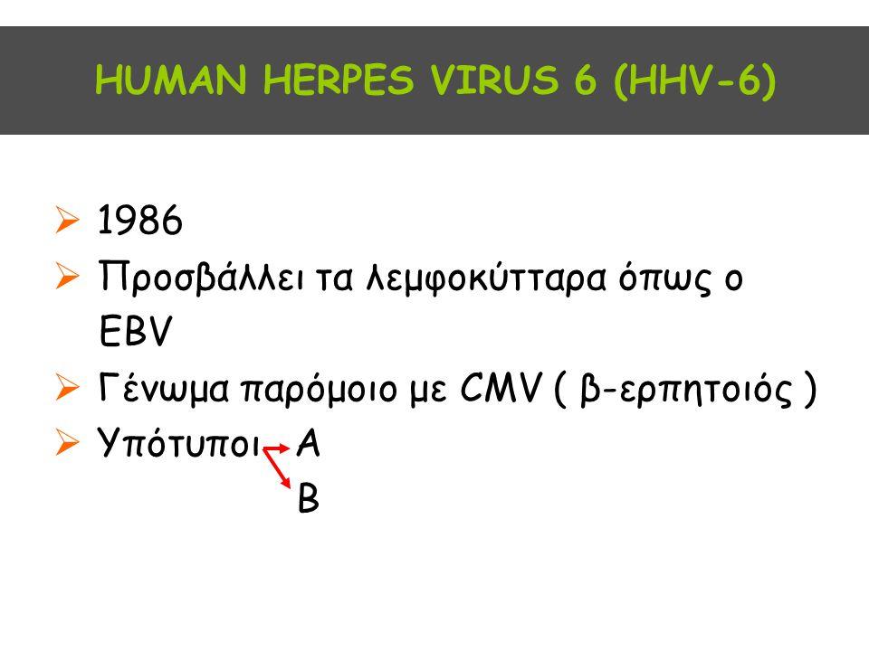ΗUMAN HERPES VIRUS 6 (HHV-6)