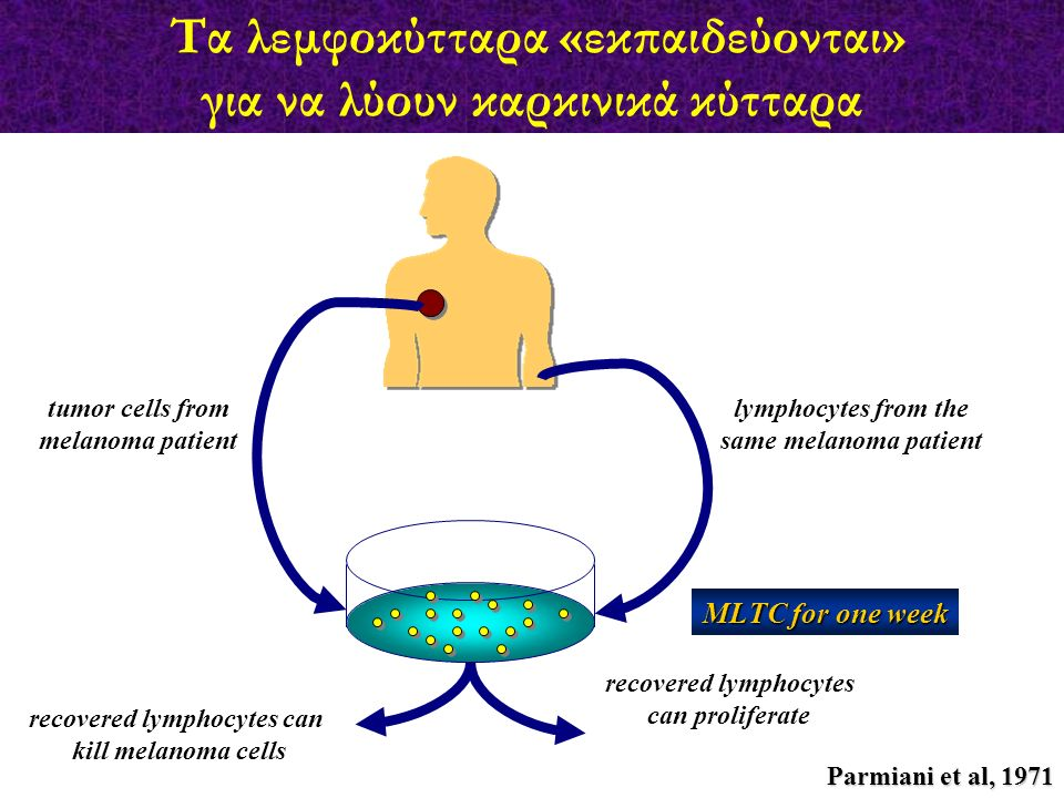 Τα λεμφοκύτταρα «εκπαιδεύονται» για να λύουν καρκινικά κύτταρα
