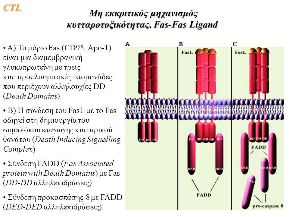 Μη εκκριτικός μηχανισμός κυτταροτοξικότητας, Fas-Fas Ligand