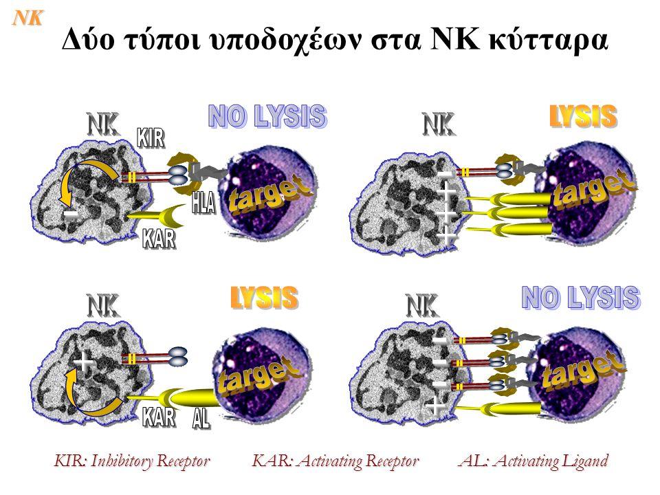 Δύο τύποι υποδοχέων στα ΝΚ κύτταρα