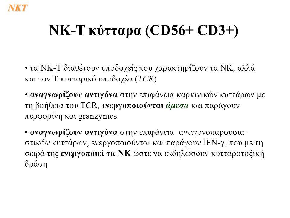 NK-T κύτταρα (CD56+ CD3+) NKΤ