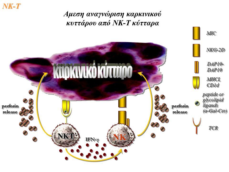 Αμεση αναγνώριση καρκινικού κυττάρου από ΝΚ-Τ κύτταρα