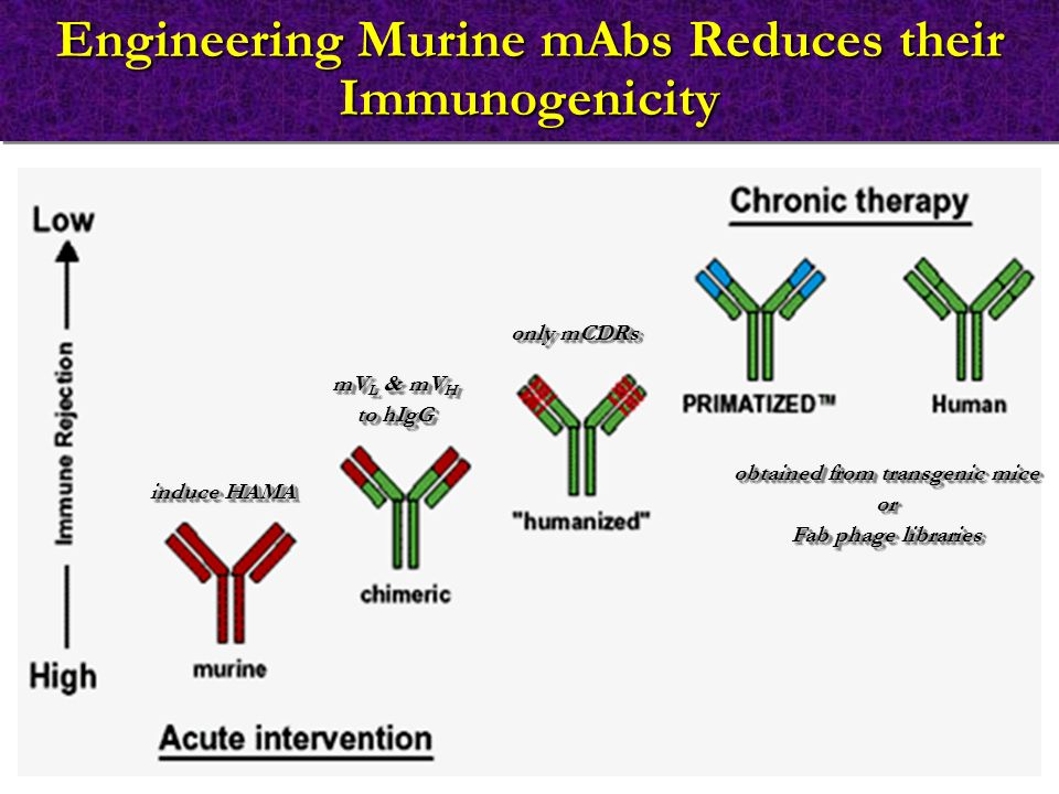 Engineering Murine mAbs Reduces their Immunogenicity