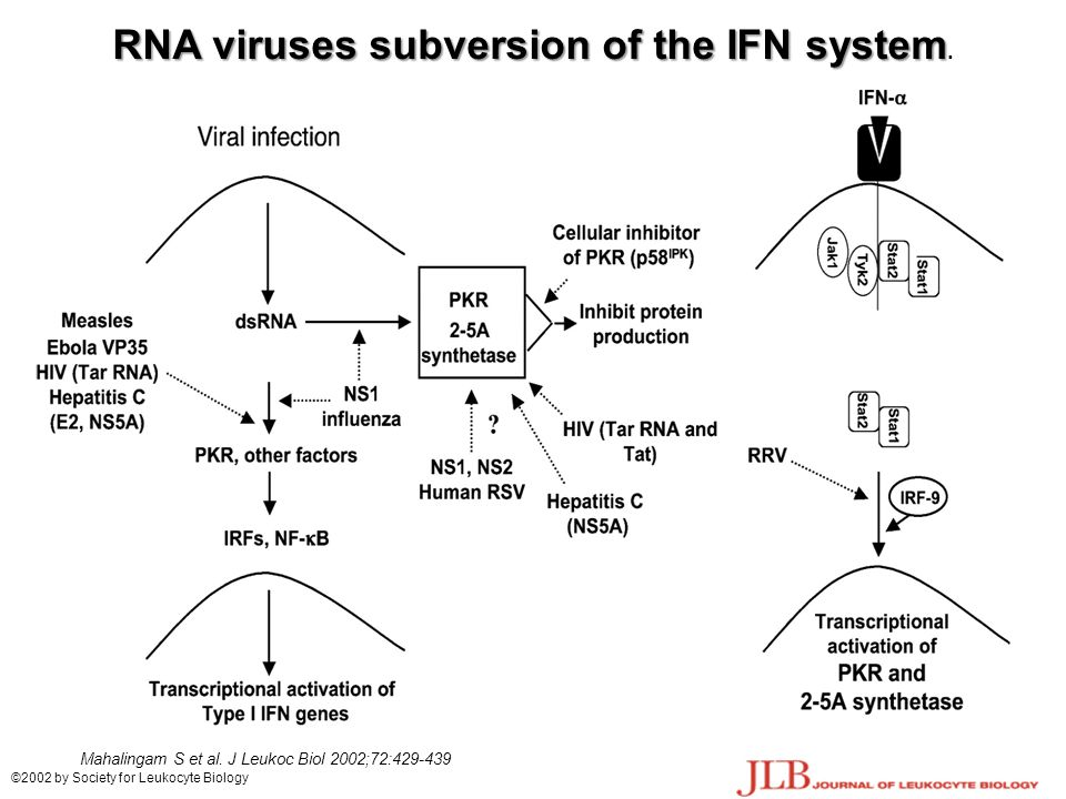 RNA viruses subversion of the IFN system.