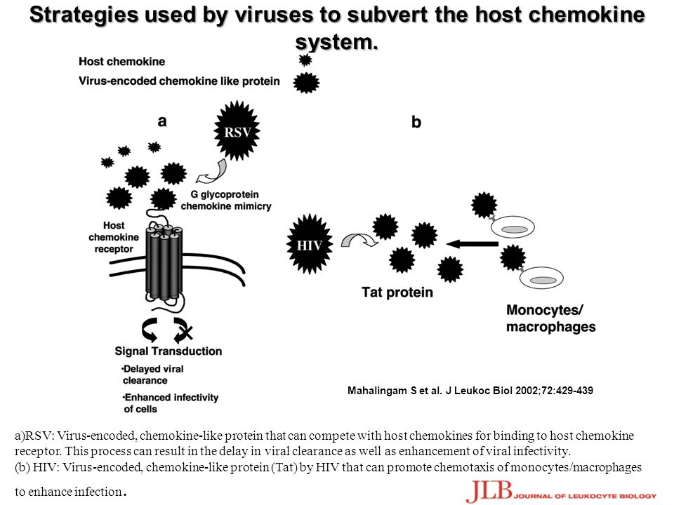 Strategies used by viruses to subvert the host chemokine system.