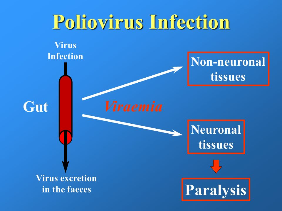 Poliovirus Infection Gut Viraemia Paralysis Non-neuronal tissues