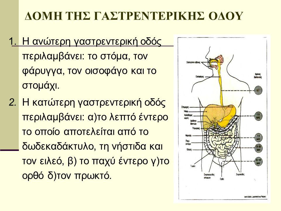 ΔΟΜΗ ΤΗΣ ΓΑΣΤΡΕΝΤΕΡΙΚΗΣ ΟΔΟΥ