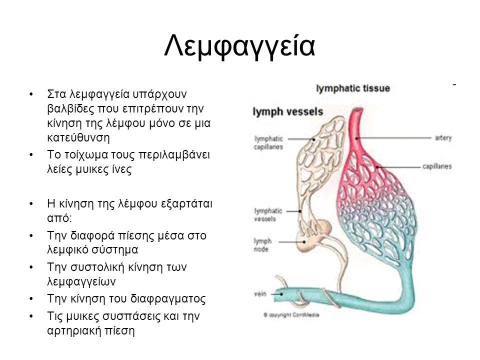 Λεμφαγγεία Στα λεμφαγγεία υπάρχουν βαλβίδες που επιτρέπουν την κίνηση της λέμφου μόνο σε μια κατεύθυνση.
