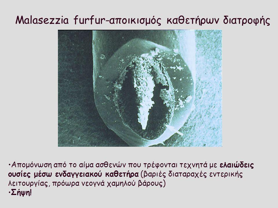 Malasezzia furfur-αποικισμός καθετήρων διατροφής