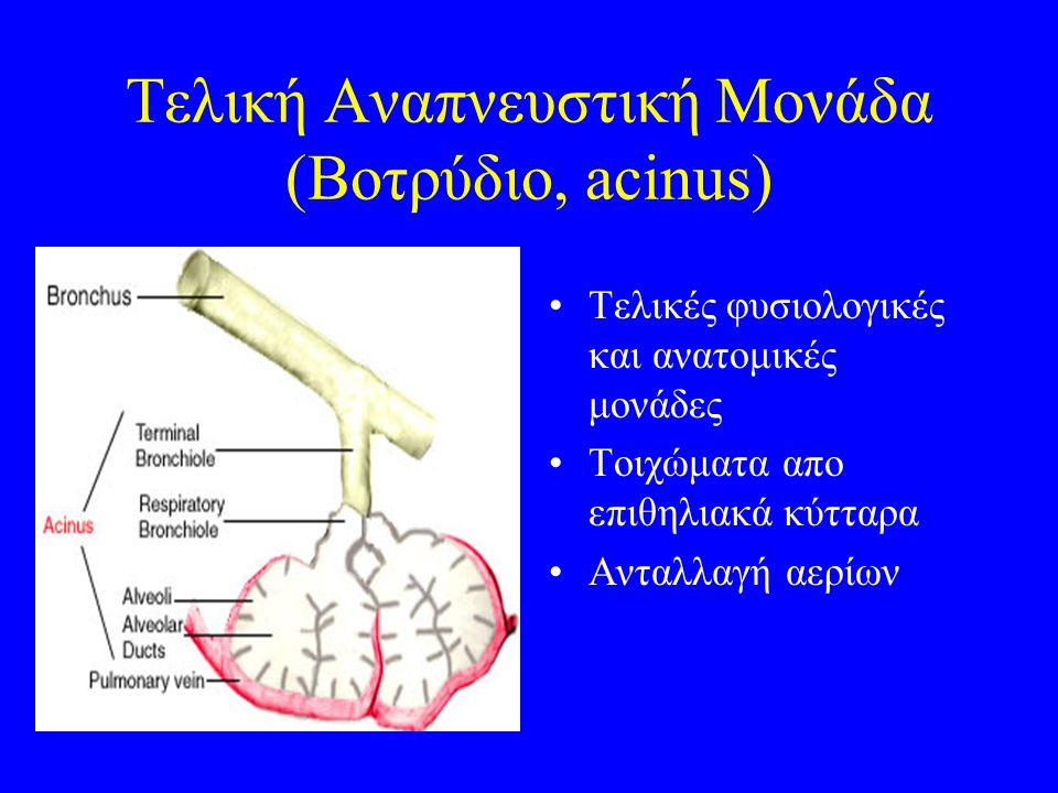 Τελική Αναπνευστική Μονάδα (Βοτρύδιο, acinus)