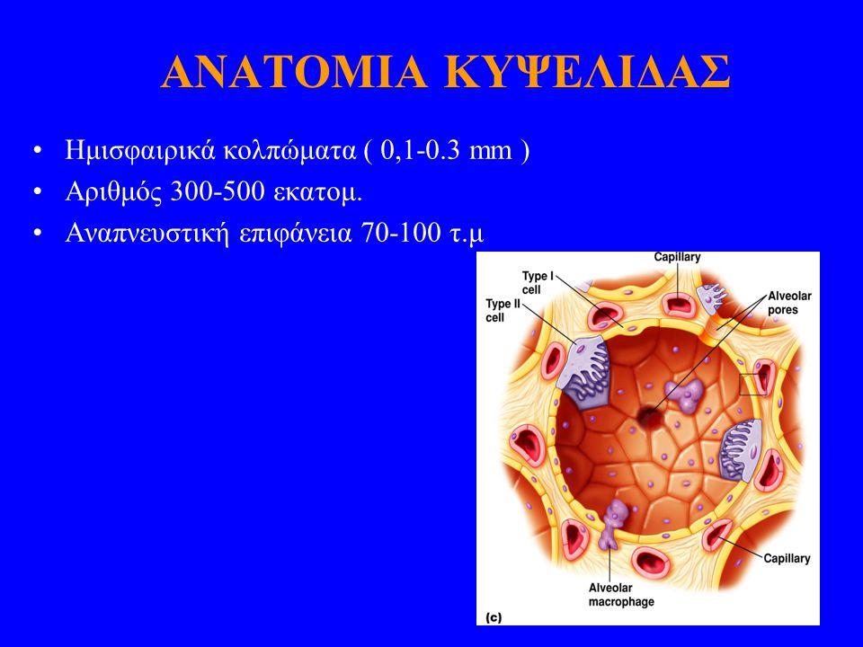 ΑΝΑΤΟΜΙΑ ΚΥΨΕΛΙΔΑΣ Ημισφαιρικά κολπώματα ( 0,1-0.3 mm )