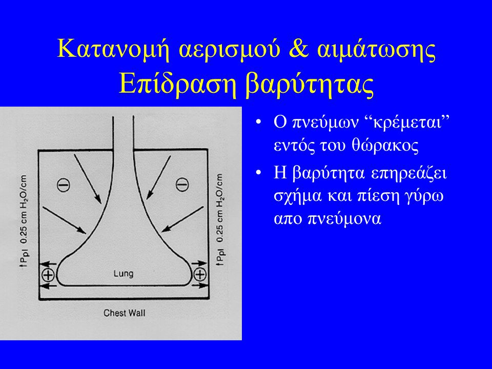 Κατανομή αερισμού & αιμάτωσης Επίδραση βαρύτητας