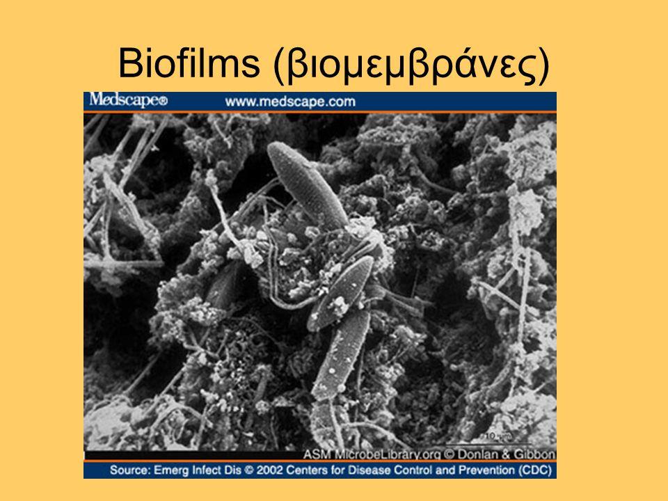 Biofilms (βιομεμβράνες)