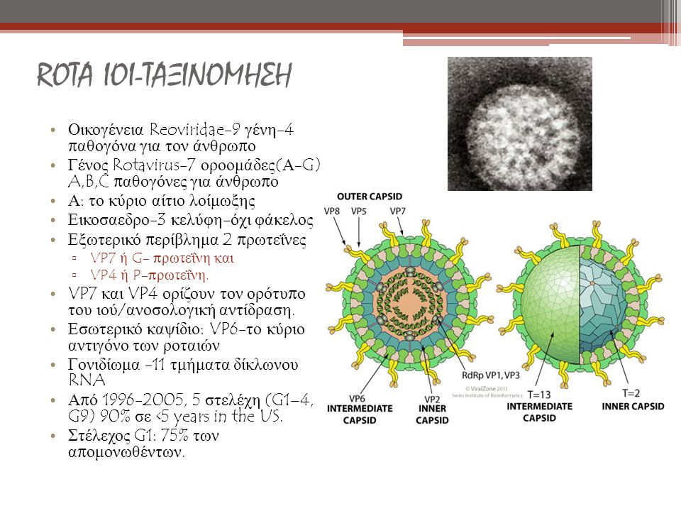ROTA ΙΟΙ-ΤΑΞΙΝΟΜΗΣΗ Οικογένεια Reoviridae-9 γένη-4 παθογόνα για τον άνθρωπο. Γένος Rotavirus-7 οροομάδες(Α- G) A,B,C παθογόνες για άνθρωπο.
