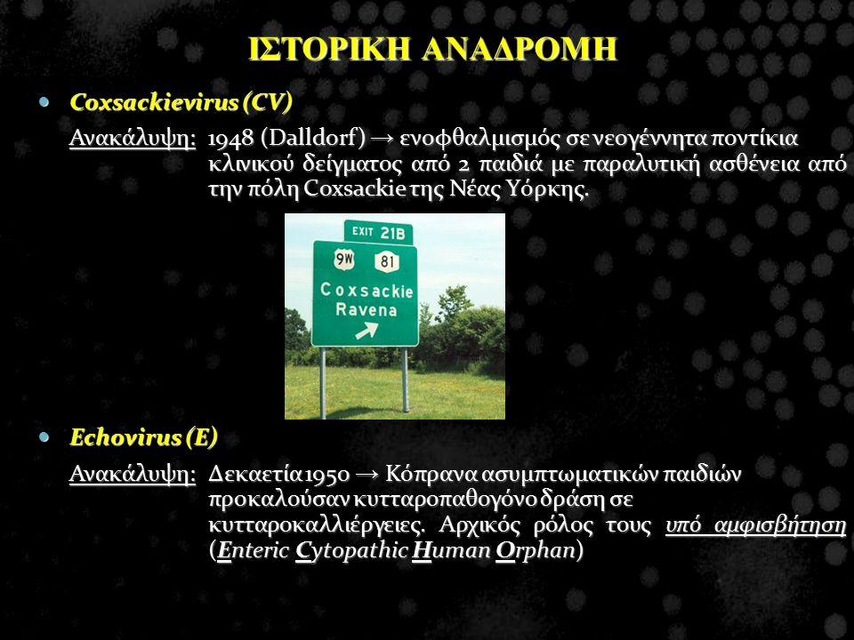 ΙΣΤΟΡΙΚΗ ΑΝΑΔΡΟΜΗ Coxsackievirus (CV)