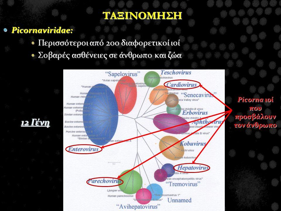 Picorna ιοί που προσβάλουν τον άνθρωπο