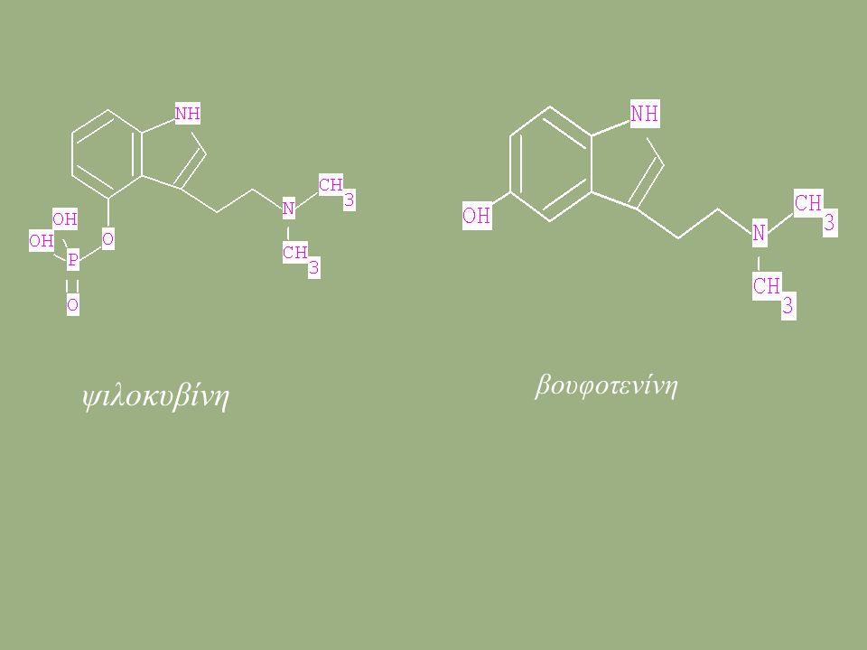 βουφοτενίνη ψιλοκυβίνη