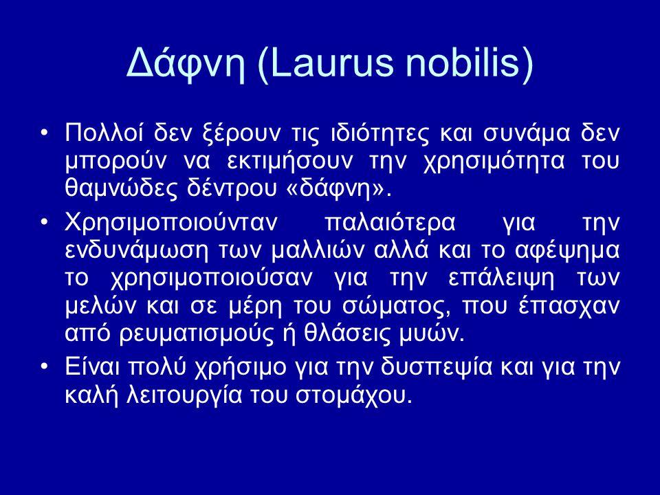 Δάφνη (Laurus nobilis)