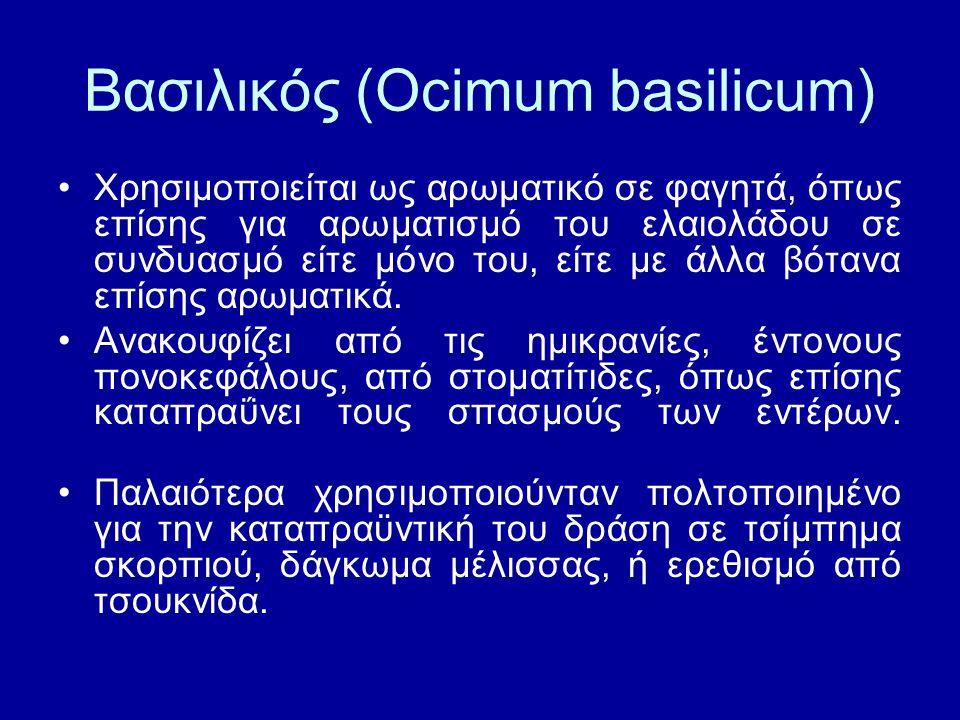 Βασιλικός (Ocimum basilicum)