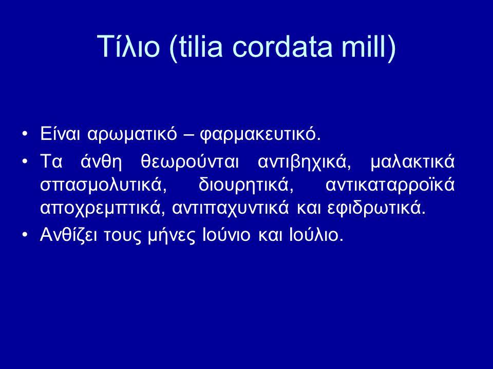 Τίλιο (tilia cordata mill)
