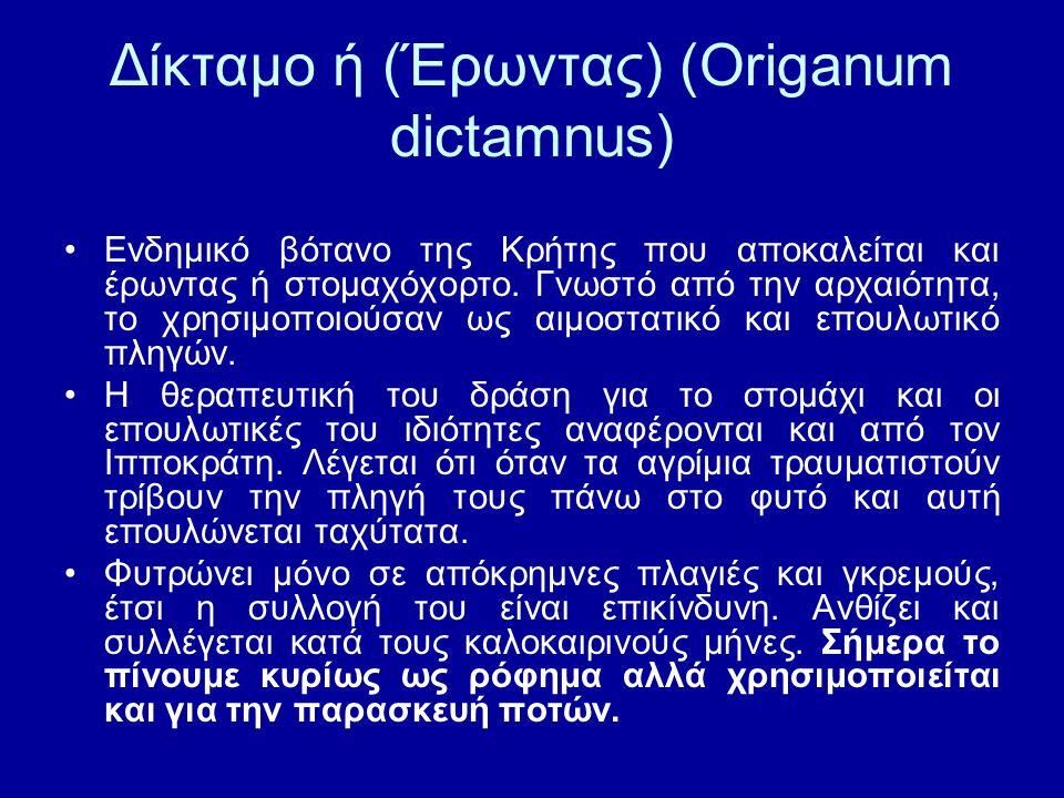 Δίκταμο ή (Έρωντας) (Origanum dictamnus)