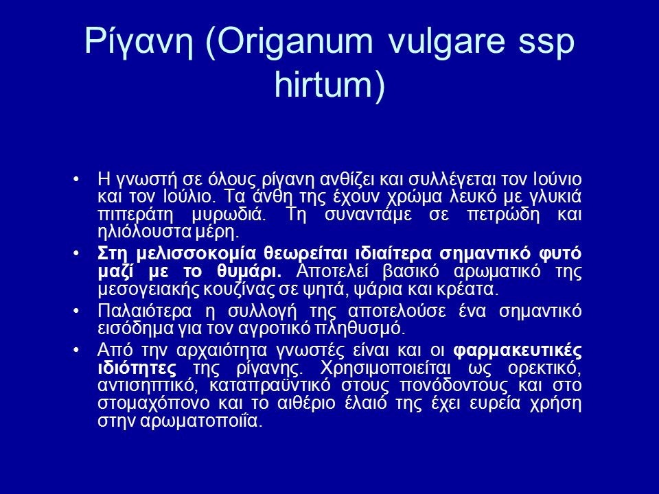 Ρίγανη (Origanum vulgare ssp hirtum)