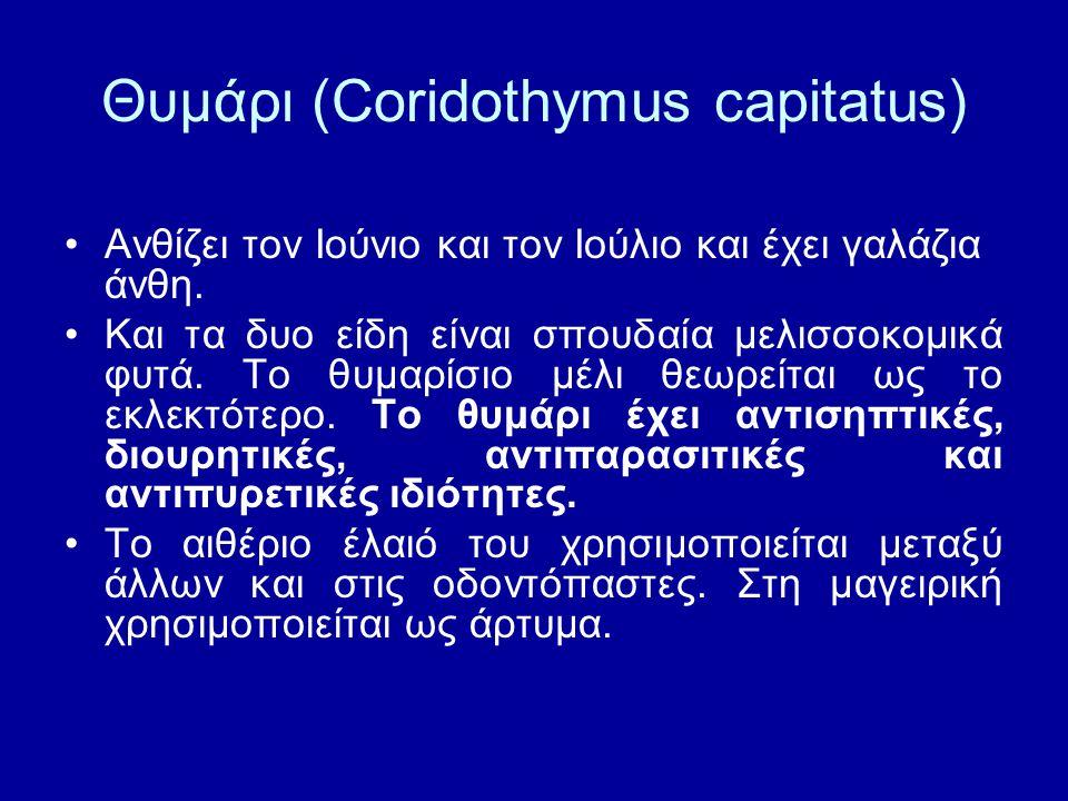 Θυμάρι (Coridothymus capitatus)