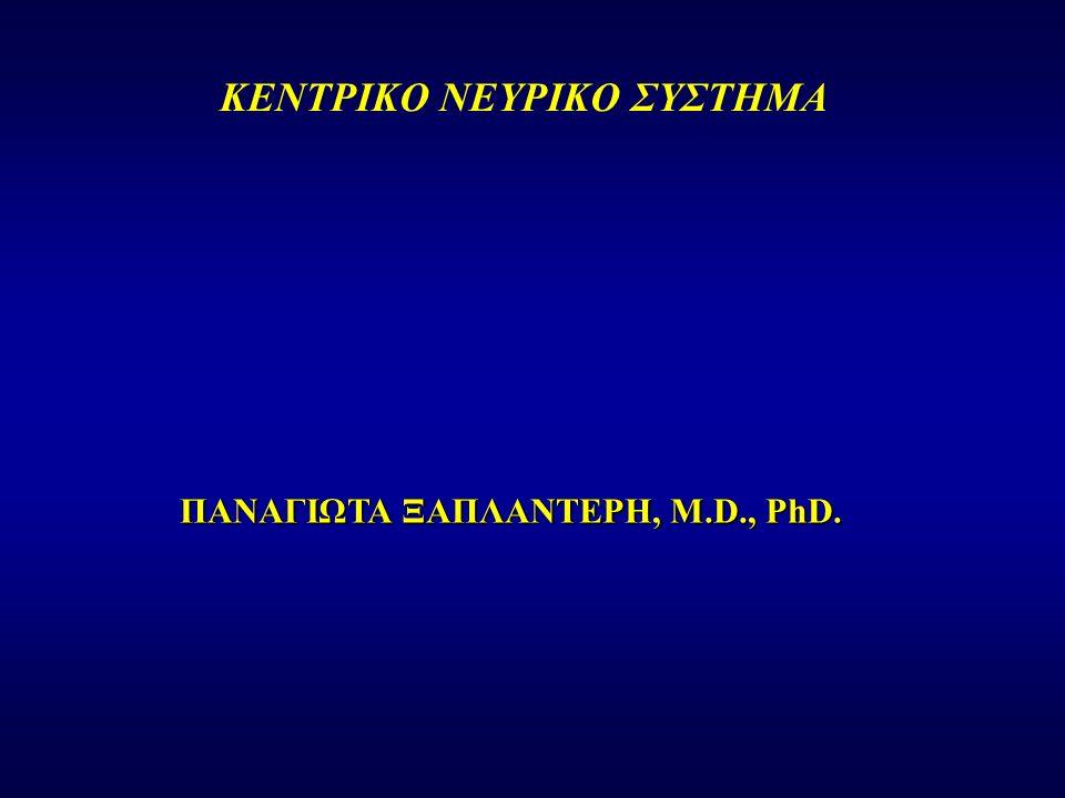 ΚΕΝΤΡΙΚΟ ΝΕΥΡΙΚΟ ΣΥΣΤΗΜΑ