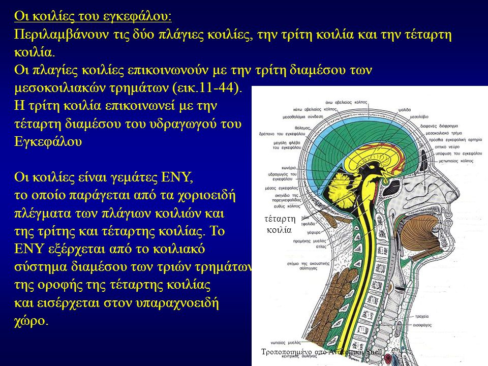 Οι κοιλίες του εγκεφάλου: