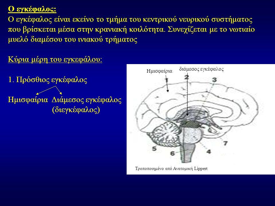 Ο εγκέφαλος είναι εκείνο το τμήμα του κεντρικού νευρικού συστήματος