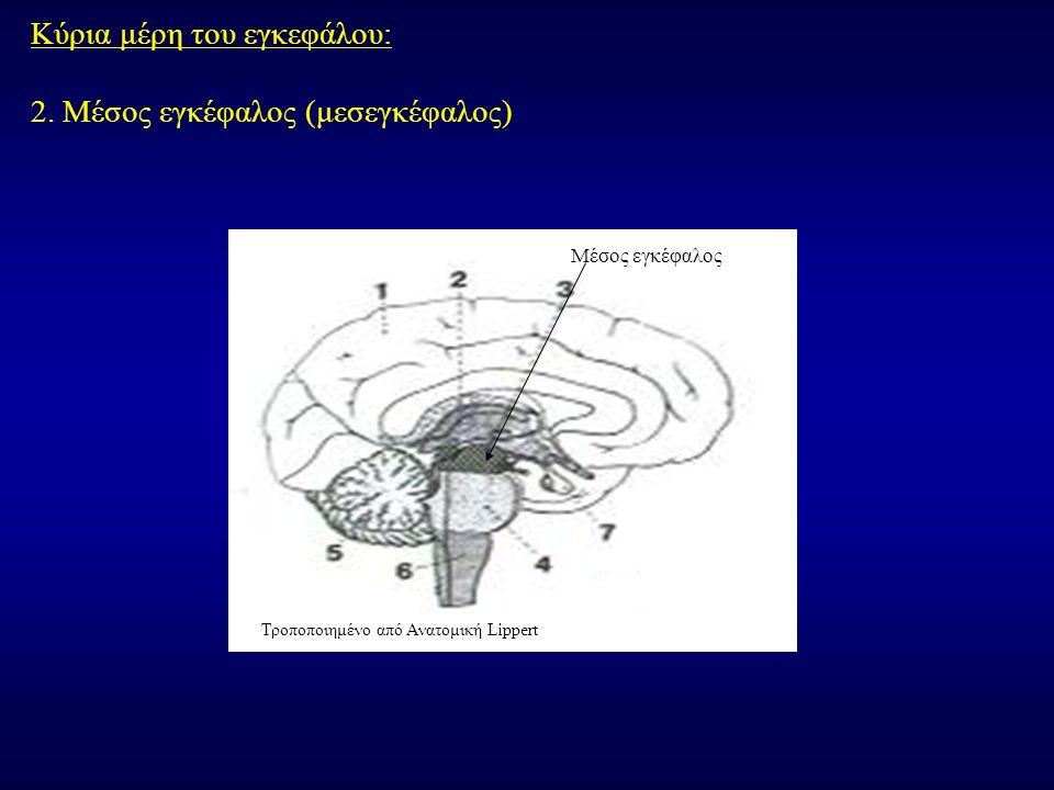 Κύρια μέρη του εγκεφάλου: 2. Μέσος εγκέφαλος (μεσεγκέφαλος)