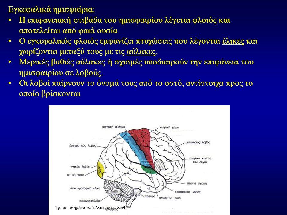 Εγκεφαλικά ημισφαίρια: