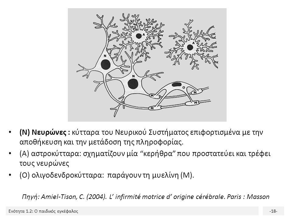 (Ο) ολιγοδενδροκύτταρα: παράγουν τη μυελίνη (Μ).