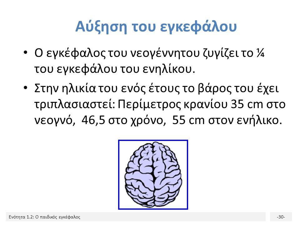 Αύξηση του εγκεφάλου Ο εγκέφαλος του νεογέννητου ζυγίζει το ¼ του εγκεφάλου του ενηλίκου.