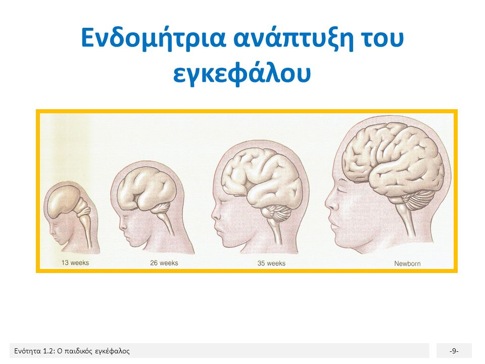 Ενδομήτρια ανάπτυξη του εγκεφάλου