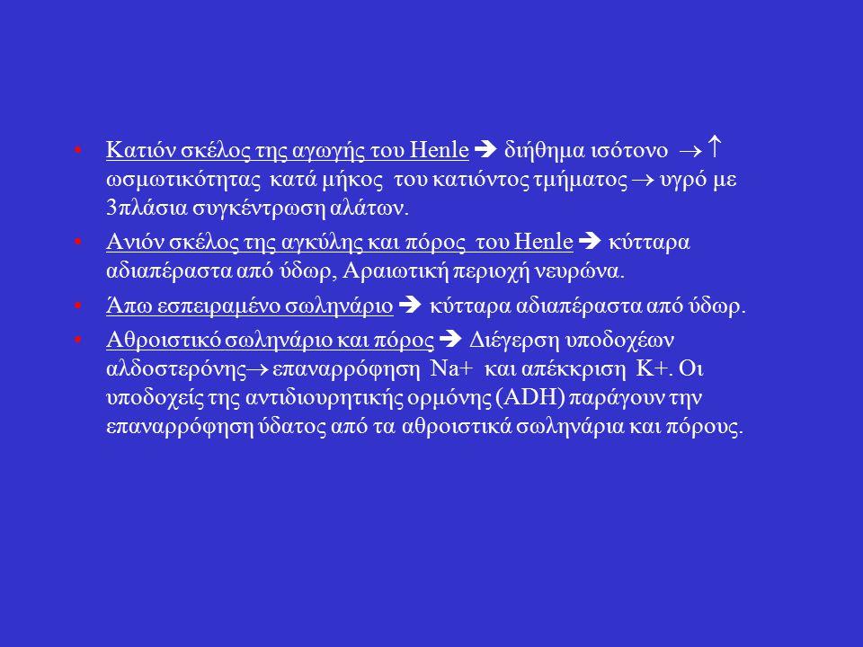 Κατιόν σκέλος της αγωγής του Henle  διήθημα ισότονο   ωσμωτικότητας κατά μήκος του κατιόντος τμήματος  υγρό με 3πλάσια συγκέντρωση αλάτων.