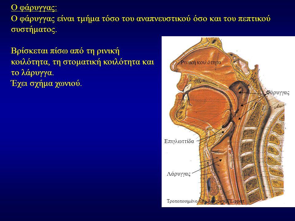 Ο φάρυγγας είναι τμήμα τόσο του αναπνευστικού όσο και του πεπτικού