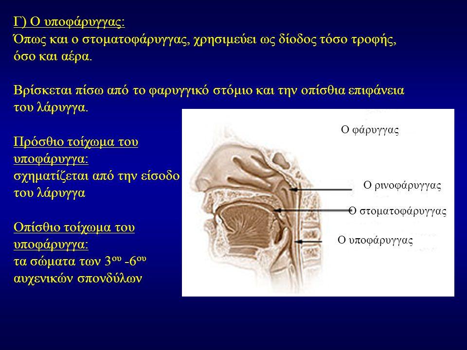 Όπως και ο στοματοφάρυγγας, χρησιμεύει ως δίοδος τόσο τροφής,
