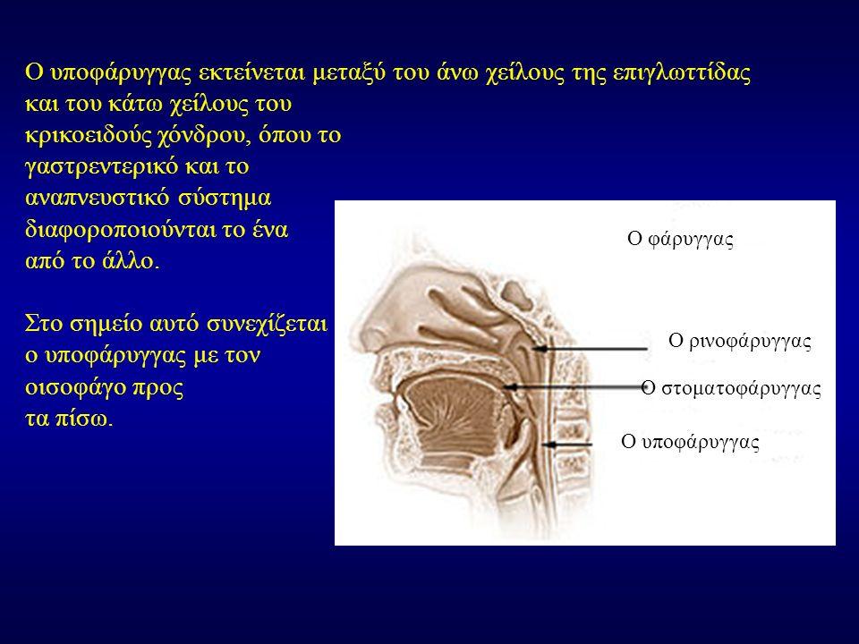Ο υποφάρυγγας εκτείνεται μεταξύ του άνω χείλους της επιγλωττίδας