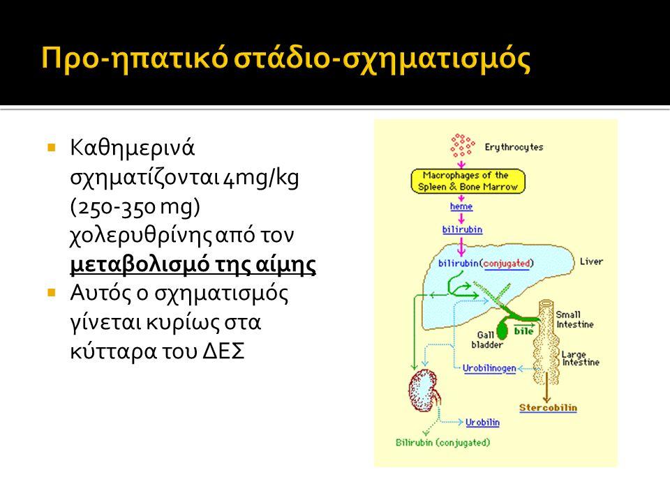Προ-ηπατικό στάδιο-σχηματισμός