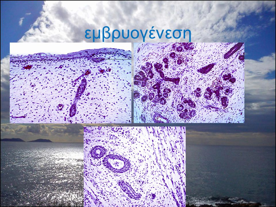 εμβρυογένεση
