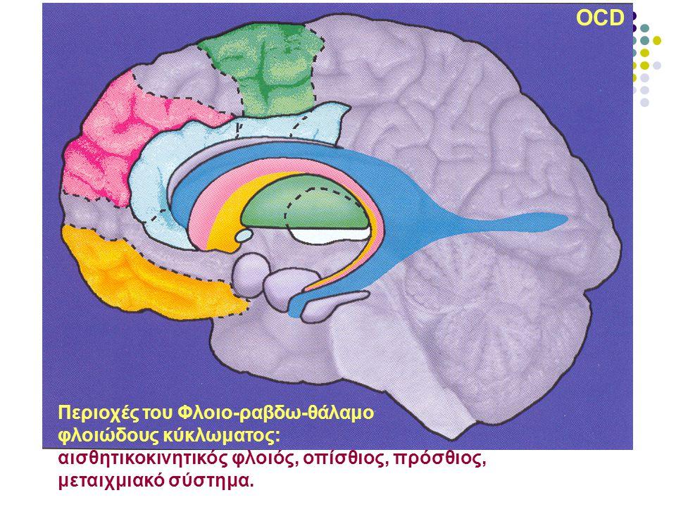 OCD Περιοχές του Φλοιο-ραβδω-θάλαμο φλοιώδους κύκλωματος: