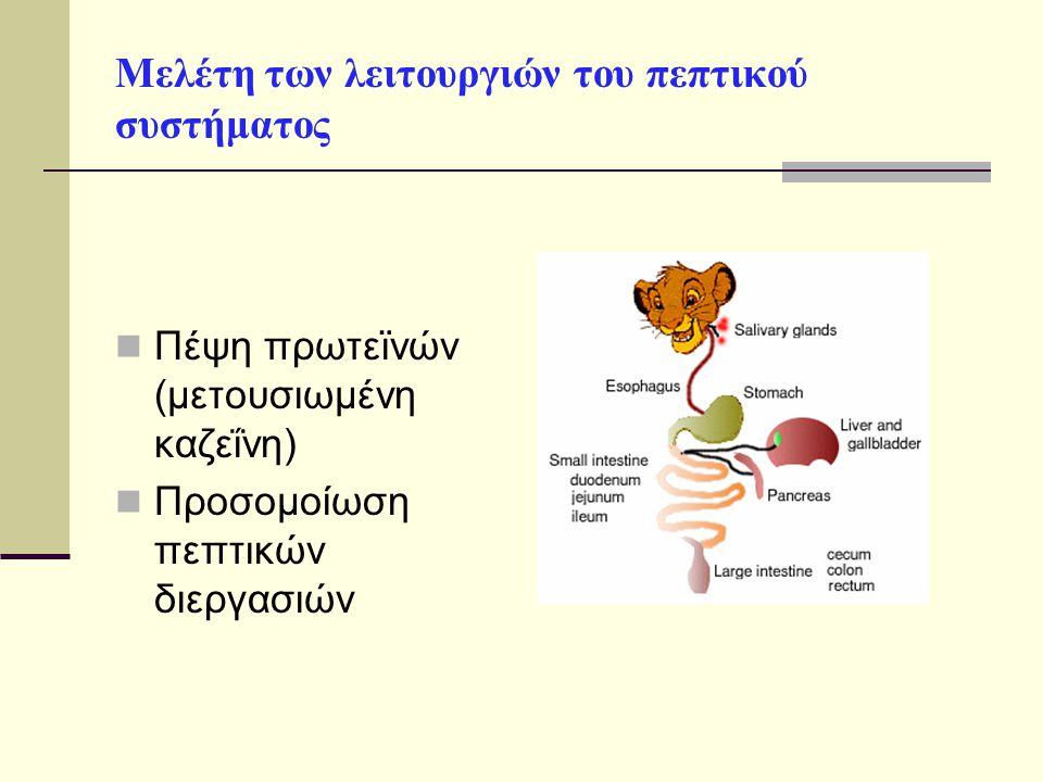 Μελέτη των λειτουργιών του πεπτικού συστήματος