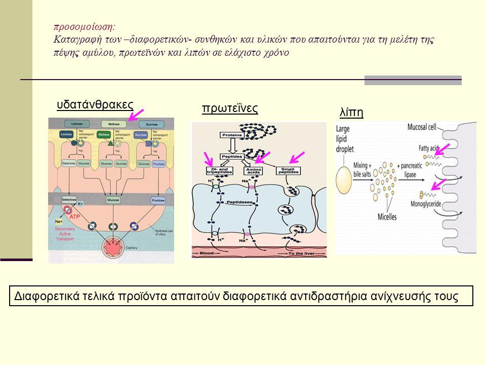 υδατάνθρακες πρωτεΐνες λίπη