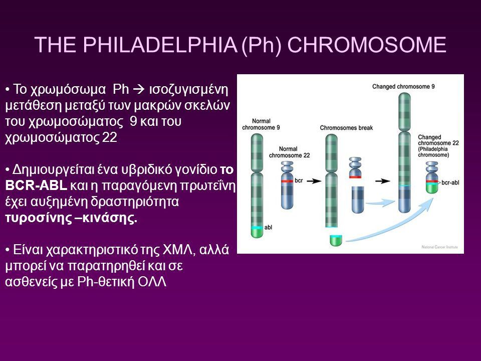 THE PHILADELPHIA (Ph) CHROMOSOME