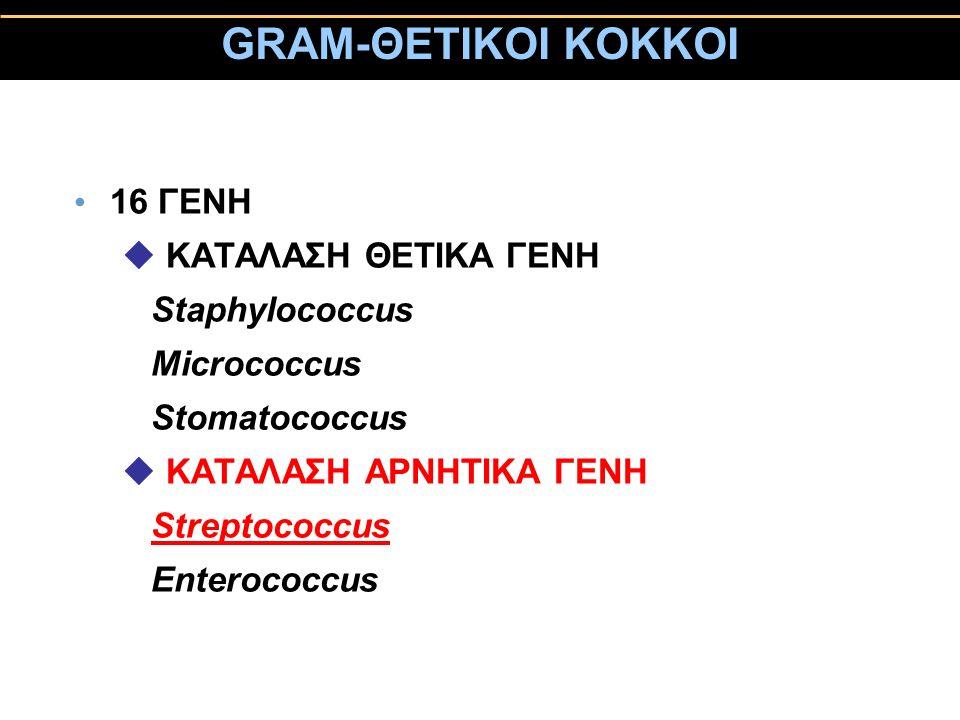 GRAM-ΘΕΤΙΚΟΙ ΚΟΚΚΟΙ 16 ΓΕΝΗ ΚΑΤΑΛΑΣΗ ΘΕΤΙΚΑ ΓΕΝΗ Staphylococcus